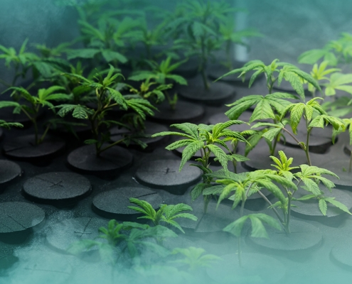 Best-ways-to-find-your-potential-cannabis-customer