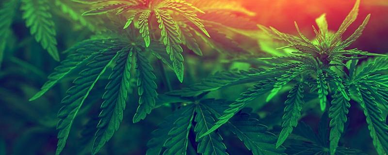 hidden costs of cannabis business